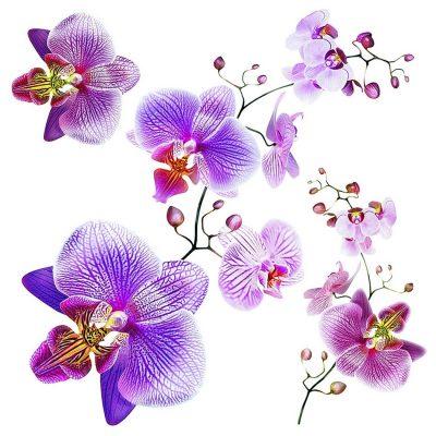 Samolepicí dekorace Orchids