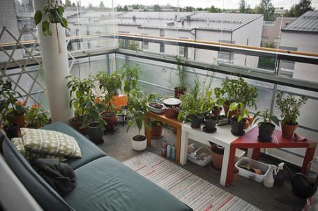 pěstování1